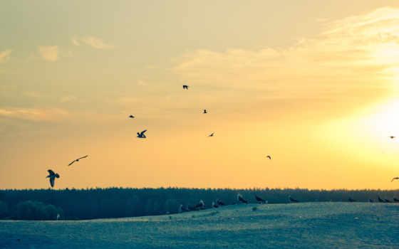 рассвет, утро, небо, вертикали, life, за, ледда, мари, доброе, чайки,