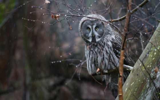 сова, птица, дерева, дождь, ветки, zhivotnye, ветке, нояб, природа, white,