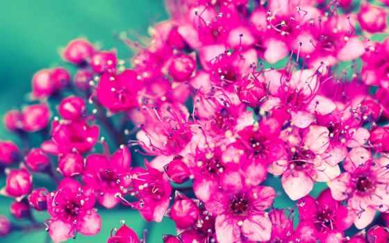 baixar, para, mobile, telefone, free, flores, imagens, bouquets,