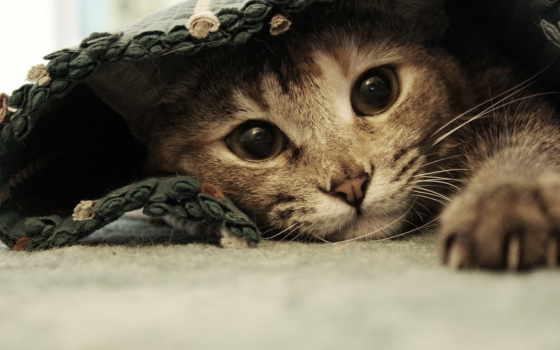 котята, котенок, кот