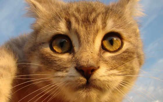 кот, obrázky, kedi, кошки, imágenes, pozadia, resimleri, gato, mačky,