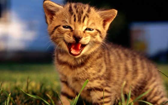 кошки, фото