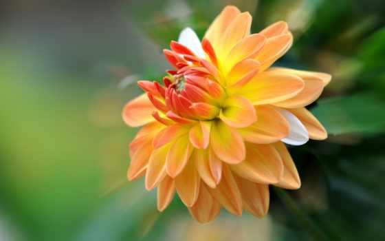 Цветы 20066