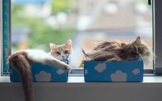 кошки, torode, daisy, окно, коробки, hannah, benjamin, тород,