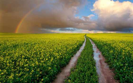 цветы, поле, небо, дорога, радуга, oblaka, южная, мокрая, african, рапс, полем,