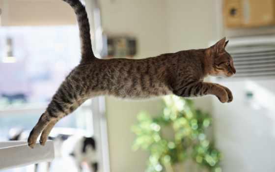 кошки, прыжке, кот, кошек, прыжок, смешные, вольтижировка, youtube, неудачные, неудачный,