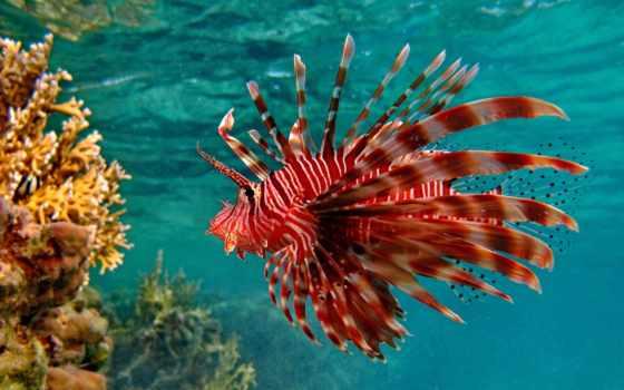 pisces, рыбки, underwater
