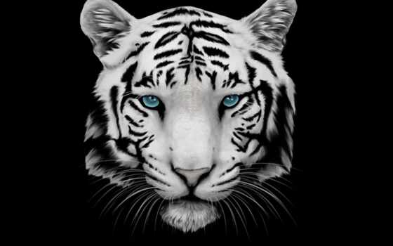 fond, tigre, blanc, фон, тигр, white