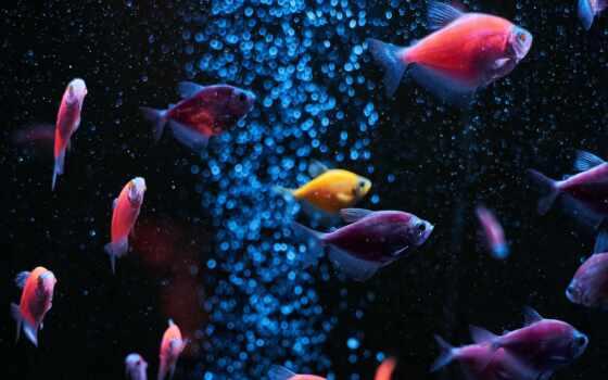 аквариум, fish, water, телефон, mobile, preview, smartphone, cofish, клеточка