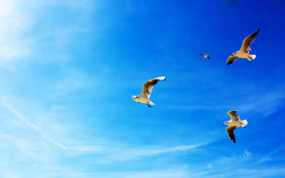 seagulls, animals, resolution