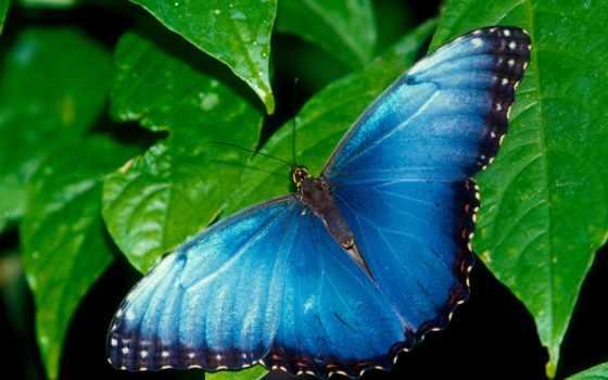 бабочки, яркие, мар