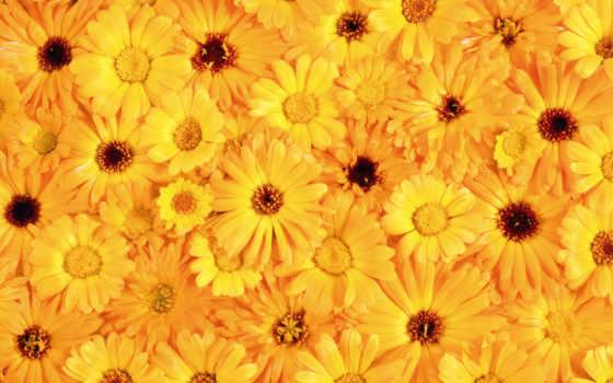 цветов, many, cvety, humbert, arnoldo, добавил, только, share, пазлы,