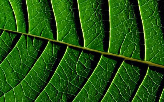 зелёный, текстура, листья