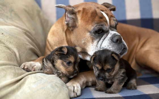 собак, щенков, собаки, блох, клещей, насекомых, щенках, собака, dr, роды,