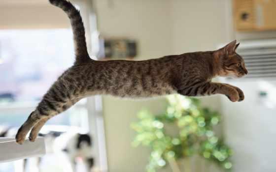 кот, прыжок, неудачный, интересно