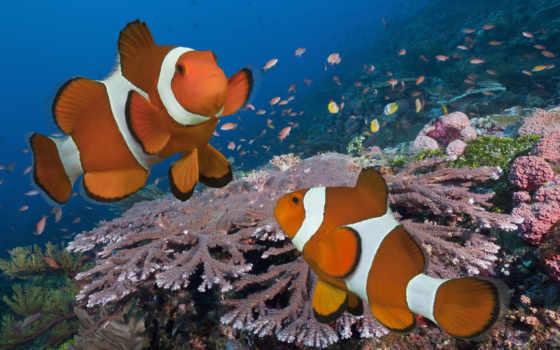 white, оранжевый, print, fish, клоун, котенок, yellow, море, anemone, pair, щенок