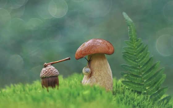 tapety, które, dodana, pulpit, jako-cus, jednym, pulpicie, snail, mushroom, kliknięciem, telefon