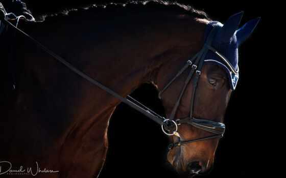 лошадь, спорт, sporthorse, julia, природа, hill, world, konie, tapety