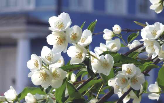 цветы, дерево, яблоня, ветка,
