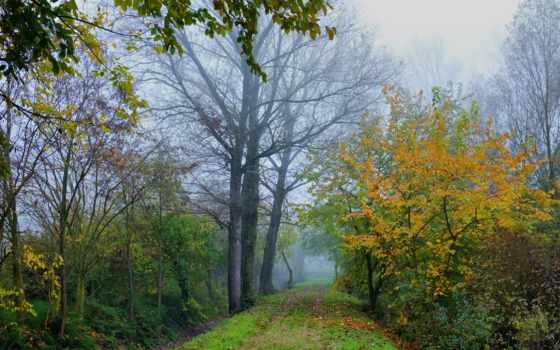 туман, пейзажи -, загрузок