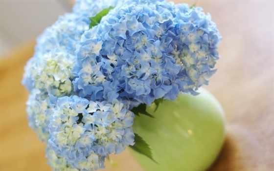 букет, цветы, взгляд