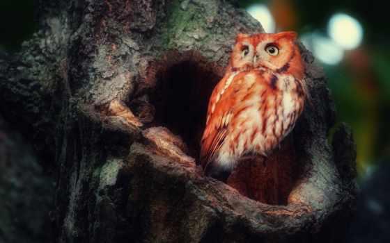 сова, птица, дерево