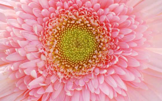 flowers, free, цветы