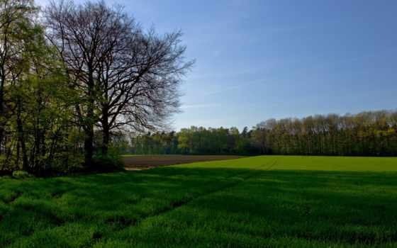 трава, лес, небо