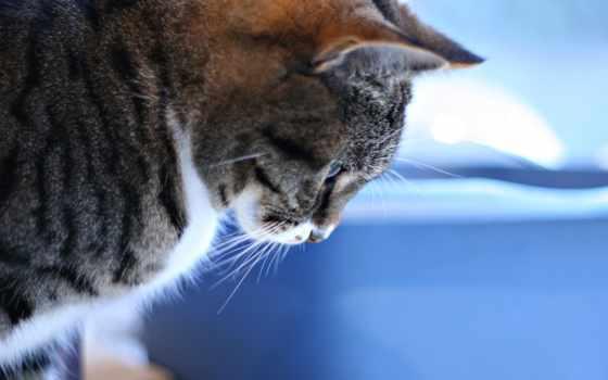 смотрит, кот, tabby, zhivotnye, вконтакте, pattern, down,