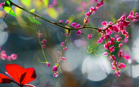 утро, туман, цветы