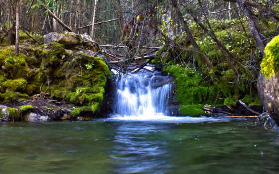 мох, ручей, природа