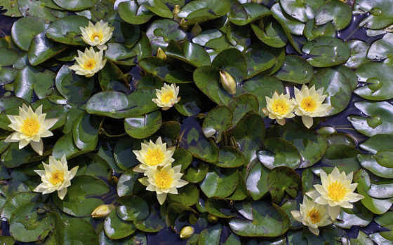 water, природа, flowers