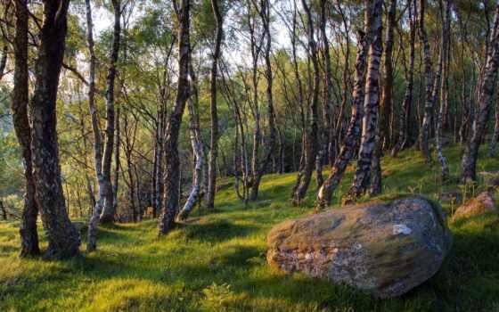 камень, весна, трава