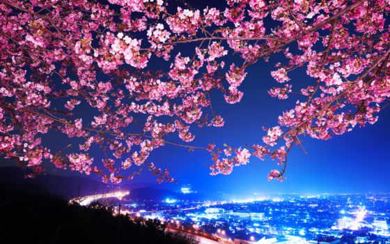 Сакура, japanese, cherry, цветущая, город, mimura, shin, города, панорама, цветы,