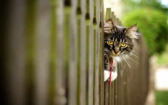 felicità, nelle, cose, piccole, кота, хозяйстве, котов, подумываете, использования, cercarla,