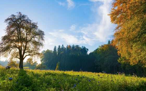 trees, небо, swiss, пейзажи -, landscape, осени, луга, утром, голубое, фрилансеров, basil,