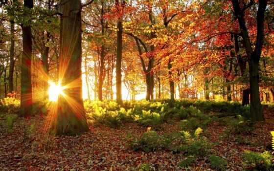 лес, rays, фотообои, sun, солнца, лучах, trees, осень, солнечные, природа,