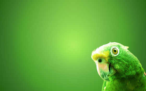 зелёный, попугай, высоком
