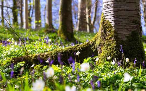 cvety, лесу, дерево, мох, summer,