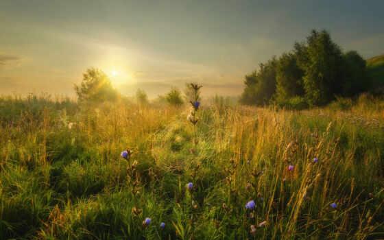free, рассвет, konstantinovo, foggy, утро, поле, konstantinov, природа, дерево, ока