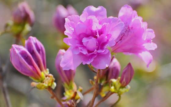 цветы, яркие, фотографии