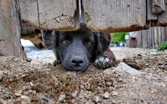 собаки, собака, взгляд