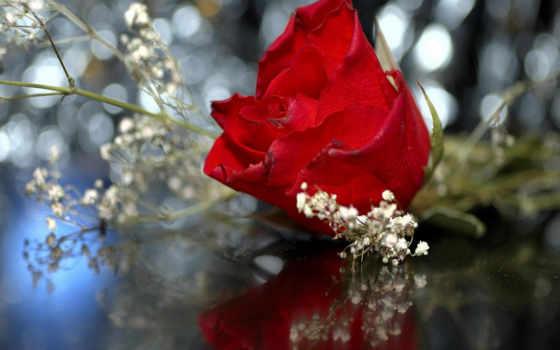 red, роза, roses Фон № 66363 разрешение 1920x1200