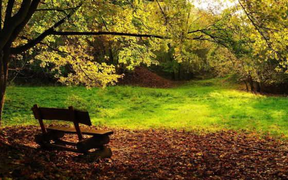 природа, дерево, скамейка, листва, landscape, sun, лес, быстро,