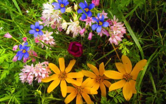 цветы, страница, tagged, букет,