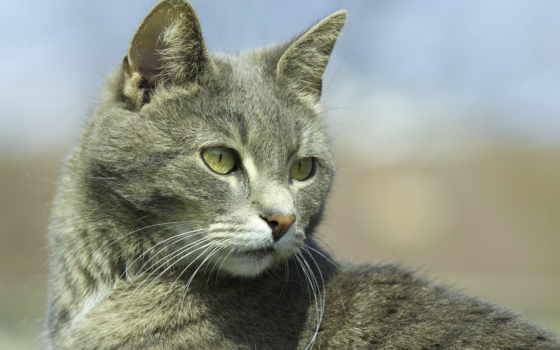 кот, high, resolution, desktop, глаза, cats,