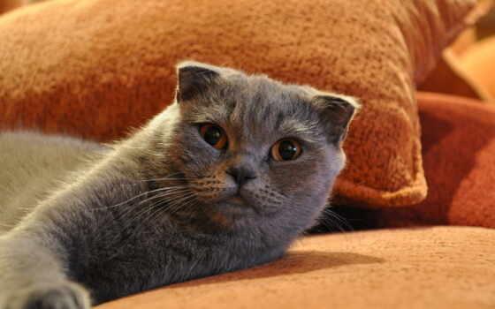 картинку, кот, zhivotnye