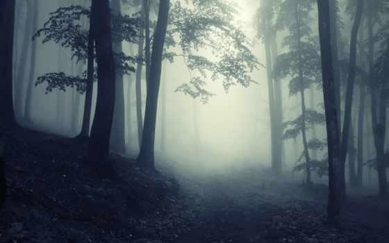 лес, foggy, природа, леса, туман, trees, mysterious, дорога, creepy, путь,