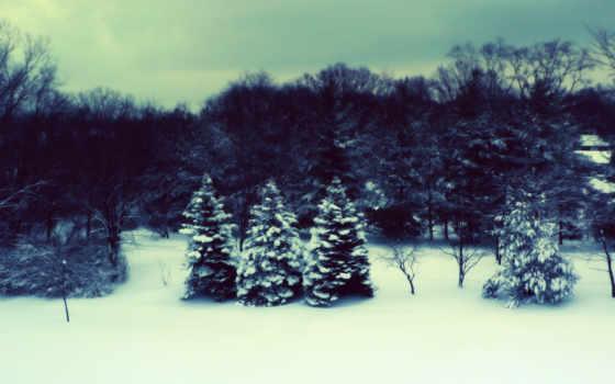 winter, природа, елки, русская, снеегу, широкоформатные,