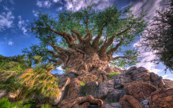 очень, trees, жизни,
